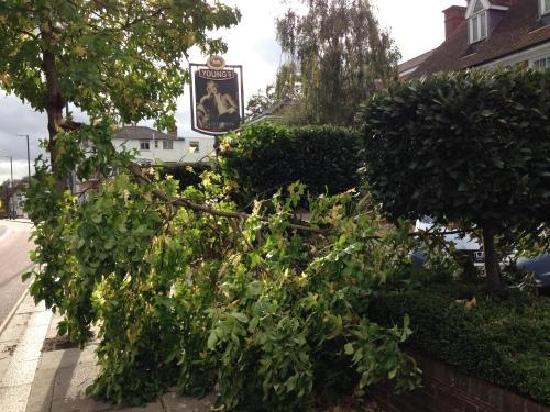 Branch v pavement, Twickenham  [copyright: David Doherty]
