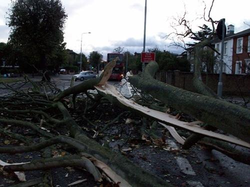 Tree down, Hounslow [copyright @gavinsanctis]