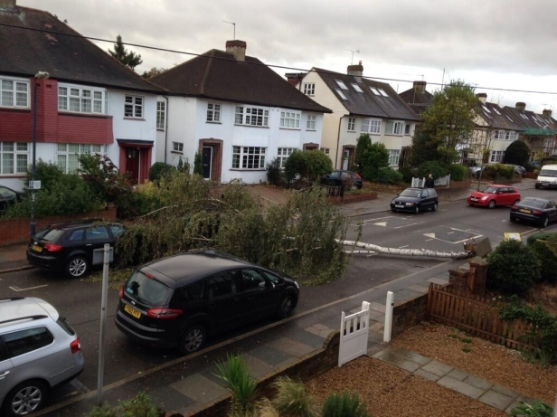 Tree down inCourt Way [copyright @FredWedgewood]