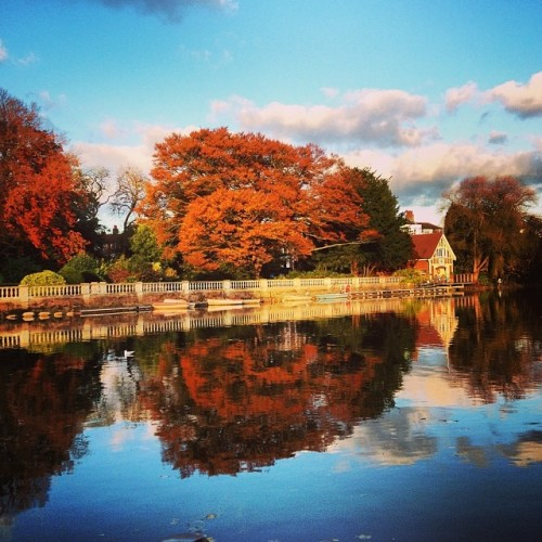 Autumn colours, Twickenham [copyright: Michele Whitby]