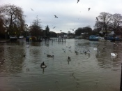 High tides in Twickenham
