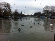 High tides in Twickenham