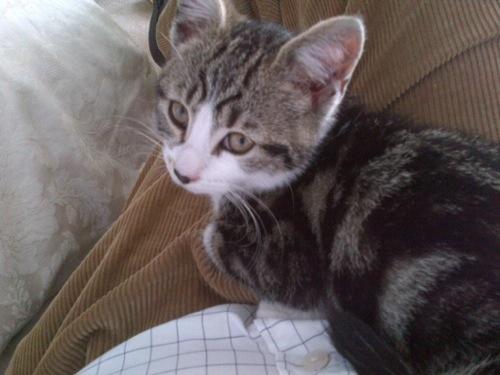 Meow. It's Micio. (Photo: anon)