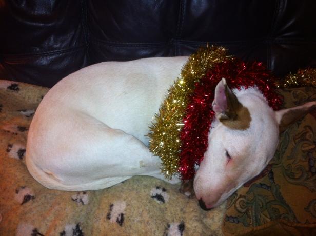 Sleeping off Christmas