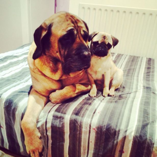 Awww. How cute? Little & Large.   (Photo: David)