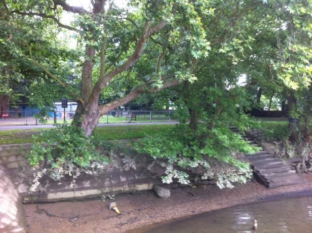 Orleans Gardens, Twickenham