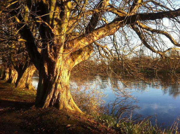 December afternoon, Orleans Gardens, Twickenham