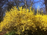 Nice to see you, to see you nice. It's Bruce Forsythia.