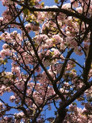 blossom marble hill park